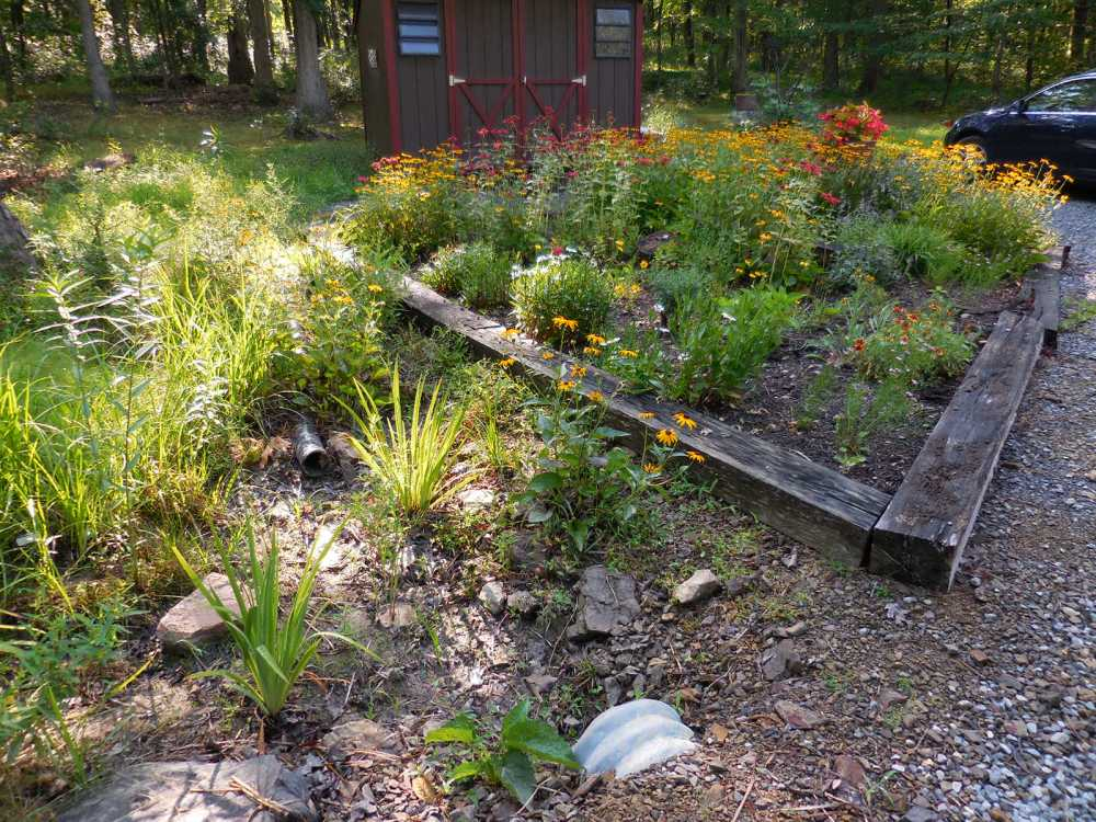 Part of the bog garden.
